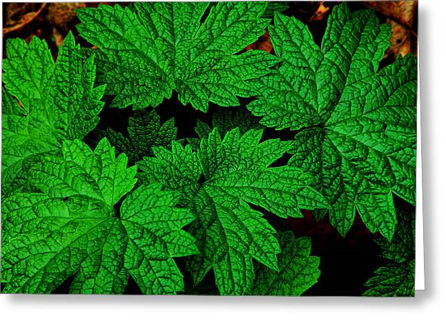 Green Burst Greeting Card by James Hammen