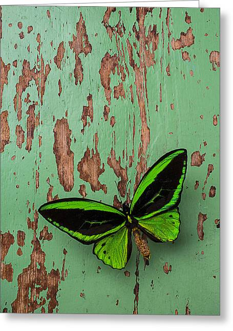Green Butterfly On Old Green Wall Greeting Card