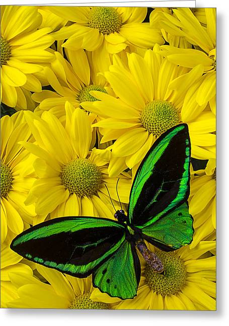 Green Butterfly On Yellow Mums Greeting Card by Garry Gay