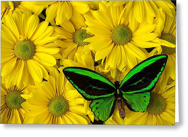 Green Butterfly Resting Greeting Card