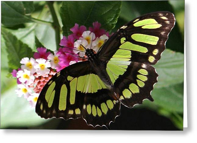 Green Butterfly With Flowers Greeting Card