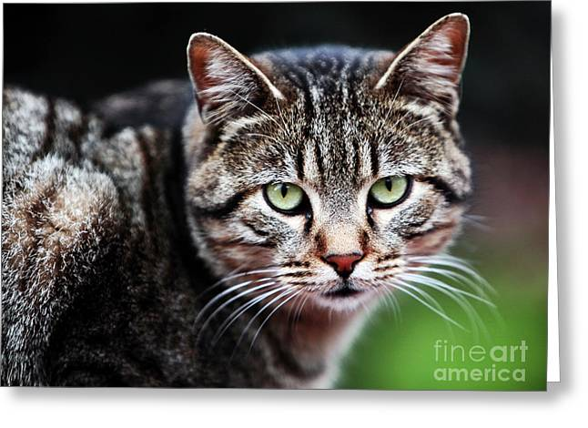 Green Cat Eyes Greeting Card by John Rizzuto