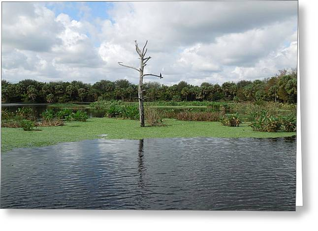 Greeting Card featuring the photograph Green Cay Panorama by Ron Davidson