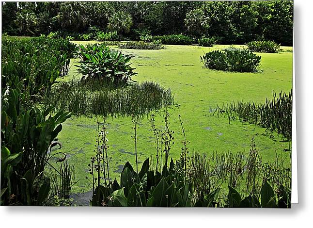 Green Cay Wetlands Greeting Card by MTBobbins Photography