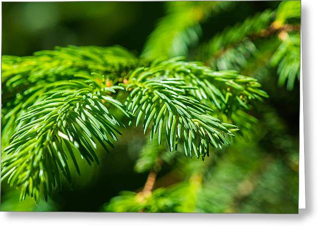 Green Christmas Tree 2 Greeting Card