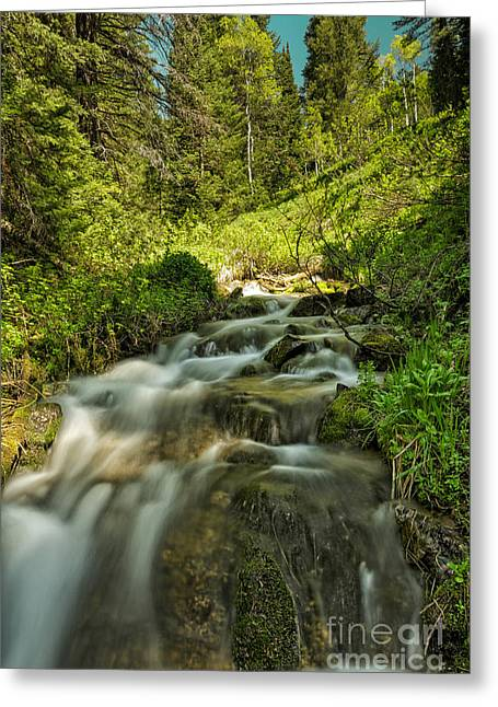 Green Colors And A Stream Greeting Card by Mitch Johanson