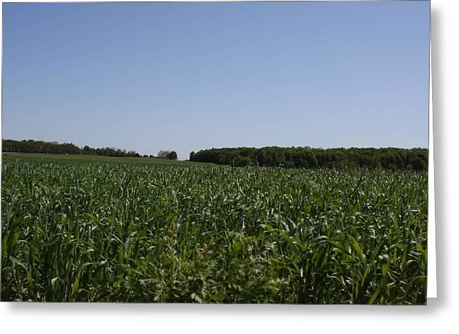 Green Corn I Greeting Card by Edward Kay