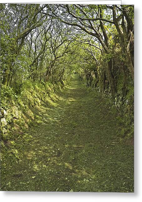 Greeting Card featuring the photograph Green Country Lane by Jane McIlroy