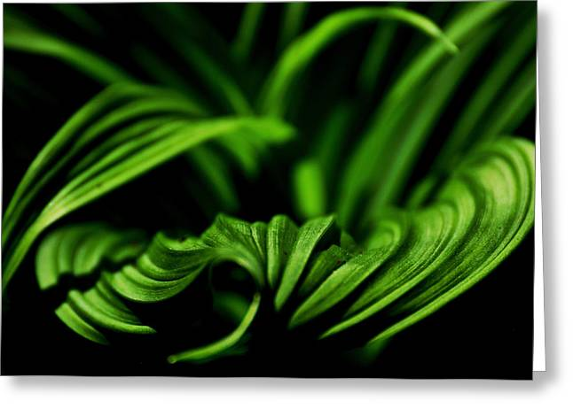 Green Curves Greeting Card by Mary Anne Williams