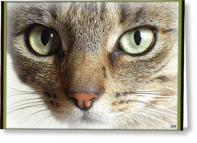 Green Eyed Cat Face Greeting Card
