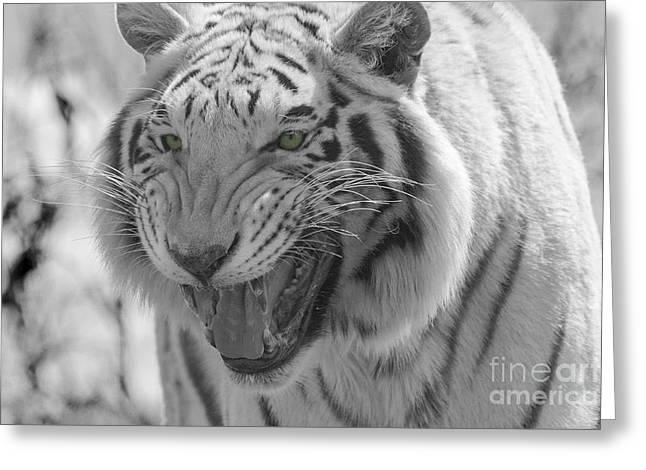 Green Eyes In Black And White Tiger Greeting Card
