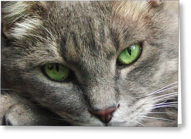 Greeting Card featuring the photograph Green Eyes by Leigh Anne Meeks