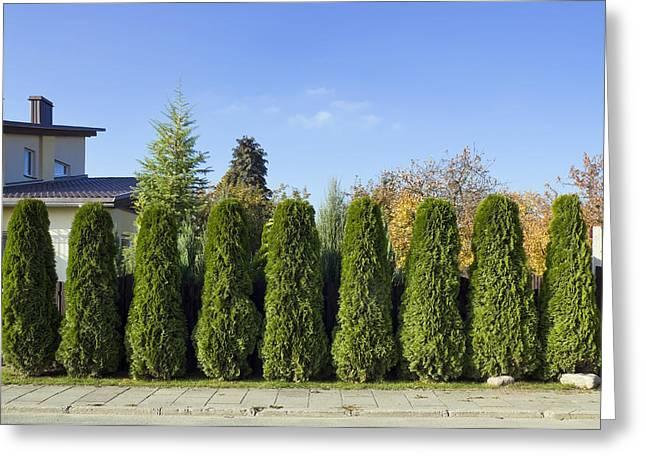 Green Fence Of Trees  Greeting Card by Aleksandr Volkov