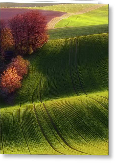 Green Fields Greeting Card by Piotr Krol (bax)