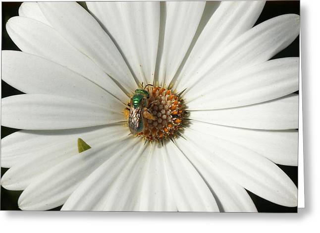 Green Fly On White Flower Greeting Card