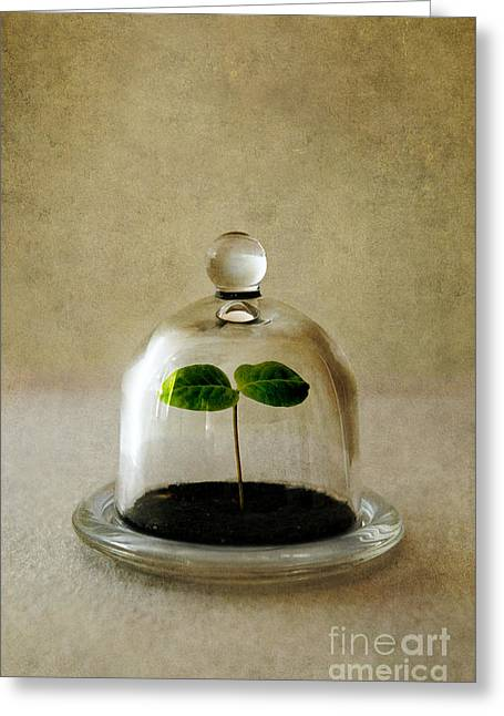 Green Fresh Plant Under The Glass Cover Greeting Card