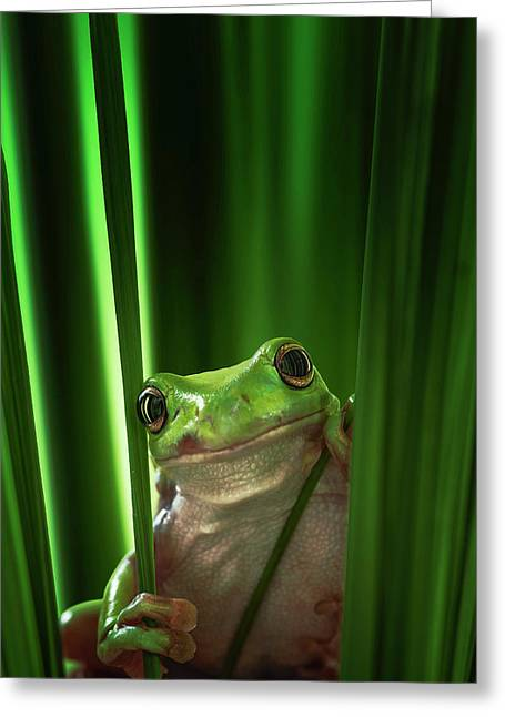 Green Frog Greeting Card by Ahmad Gafuri