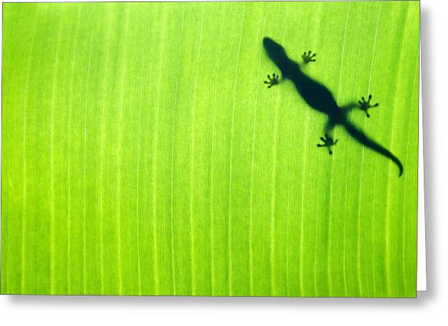 Green Gecko Leaf Greeting Card by Sean Davey