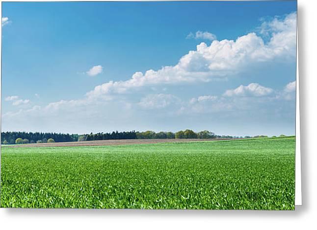 Green Grass And Blue Sky Greeting Card by Wladimir Bulgar