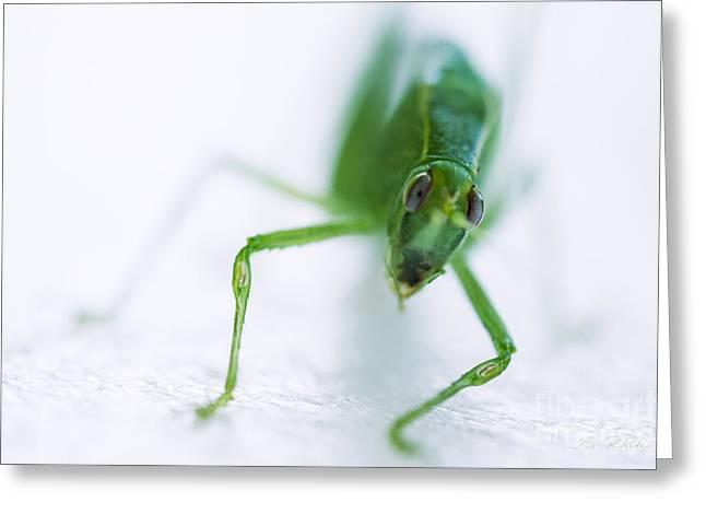 Green Grasshopper Caelifera Greeting Card