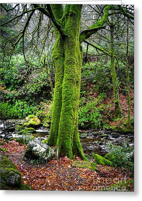 Green Green Moss Greeting Card