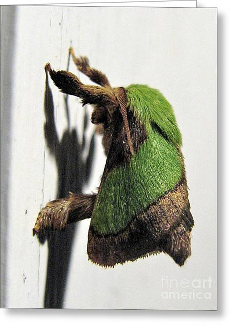 Green Hair Moth Greeting Card
