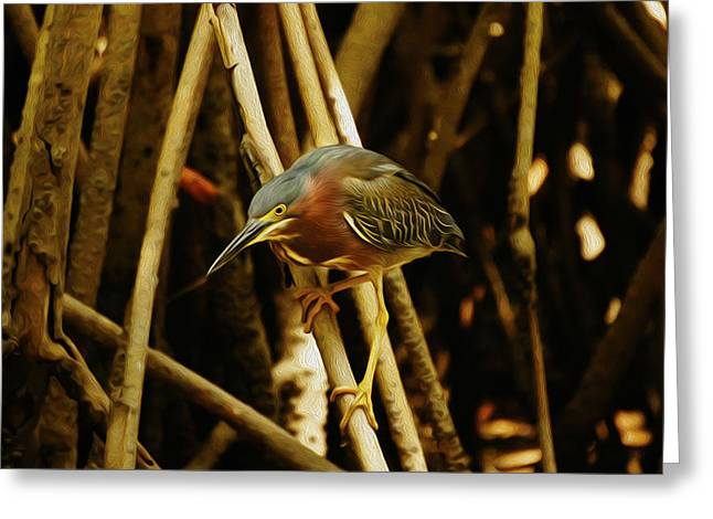 Green Heron Greeting Card by Aged Pixel