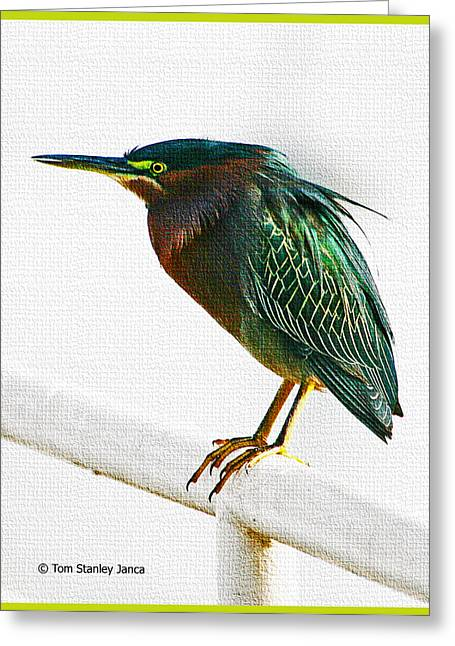 Green Heron In Scottsdale Greeting Card