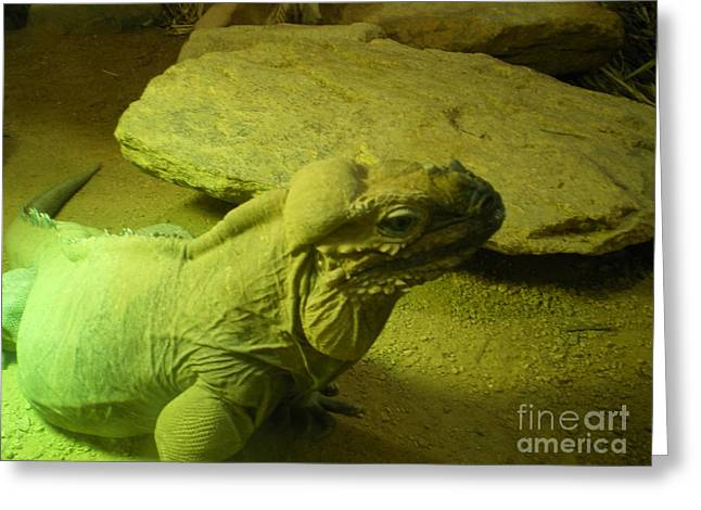 Green Iguana Greeting Card by Ann Fellows