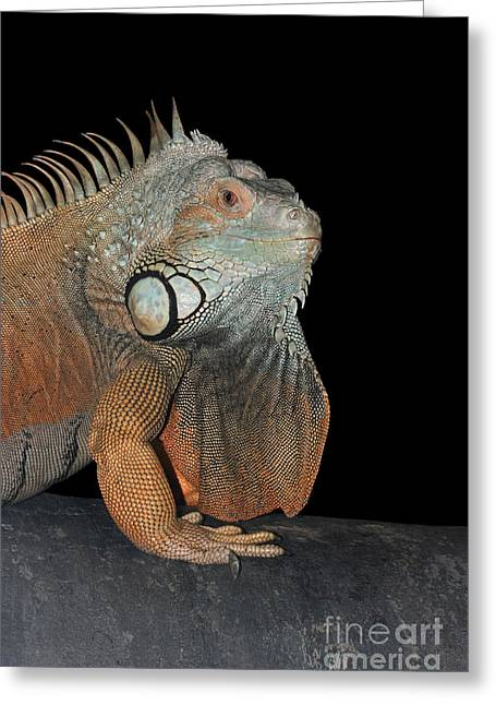 Green Iguana  Greeting Card by Judy Whitton