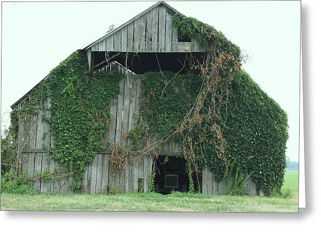 Green Ivy Barn Greeting Card by Terry Scrivner