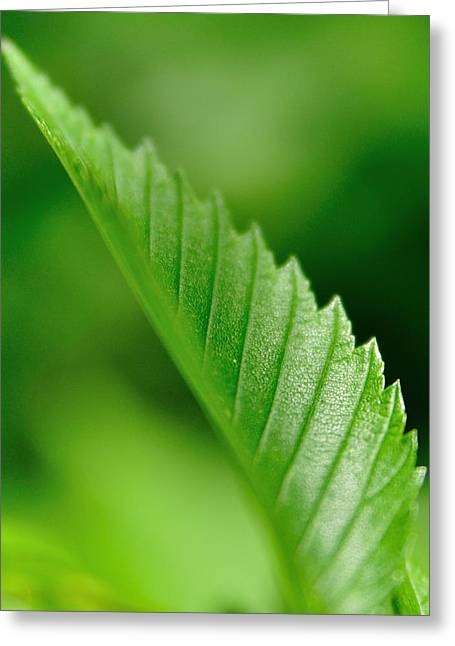 Green Leaf 002 Greeting Card by Todd Soderstrom