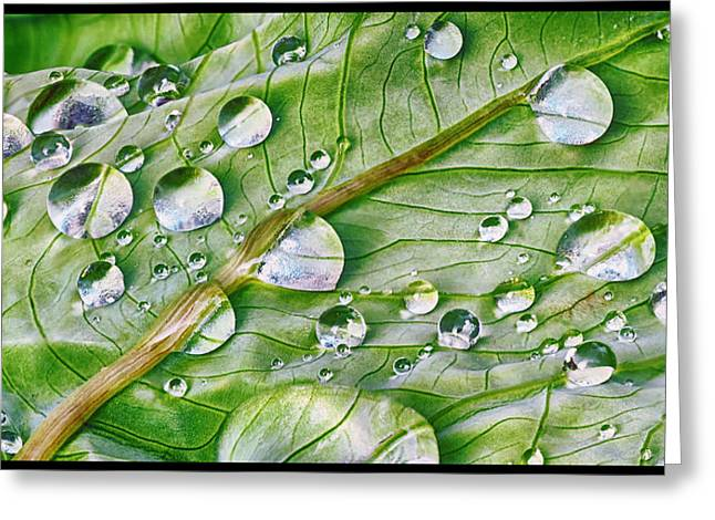 Green Leaf And Rain Drops Greeting Card