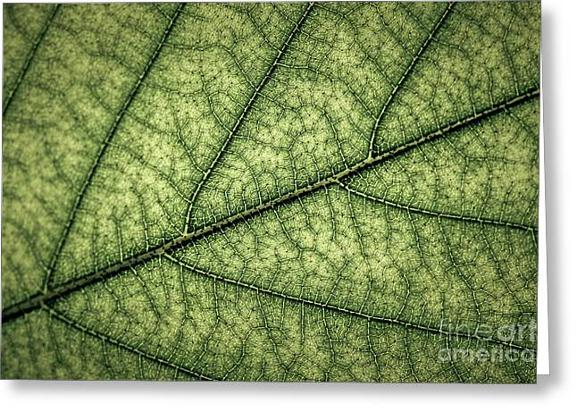 Green Leaf Texture Greeting Card