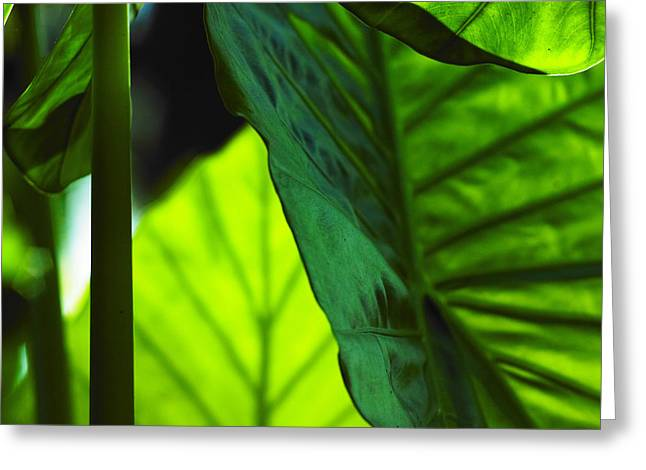 Greeting Card featuring the photograph Green Leaf Trilogy I by Silke Brubaker