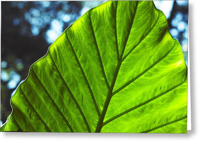 Greeting Card featuring the photograph Green Leaf Trilogy II by Silke Brubaker