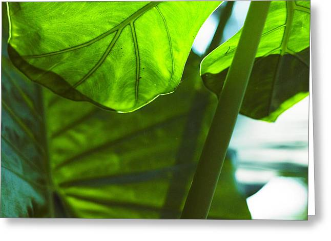 Greeting Card featuring the photograph Green Leaf Trilogy IIi by Silke Brubaker