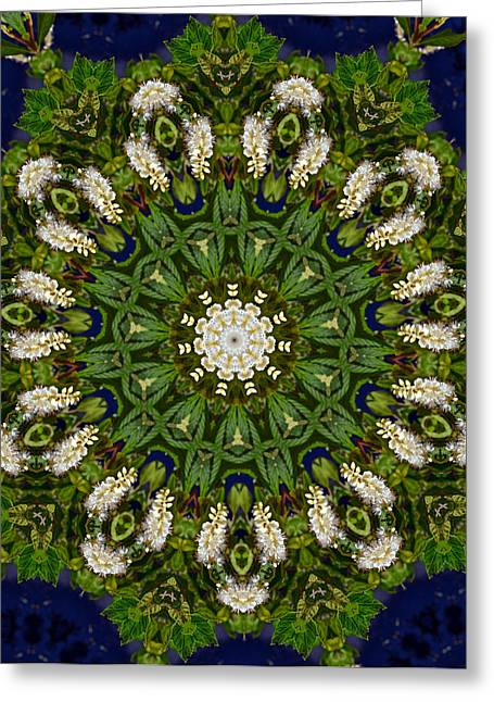 Green Leaf White Flower Mandala Greeting Card