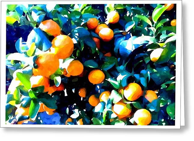 Green Leaves And Mature Oranges On The Tree Greeting Card by Lanjee Chee