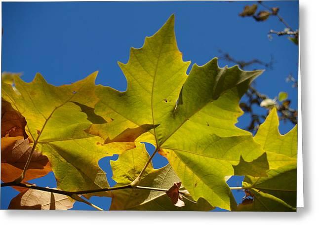 Green Leaves Greeting Card by Brian Scantlebury