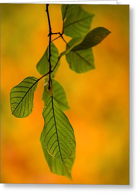 Green Leaves In Autumn Greeting Card