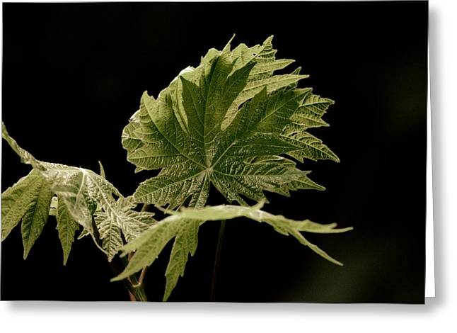 Green Leaves Greeting Card by Jeff Swan