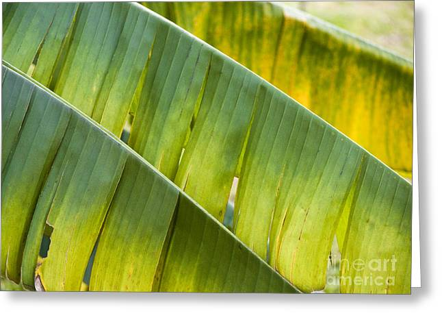 Green Leaves Series 14 Greeting Card by Heiko Koehrer-Wagner