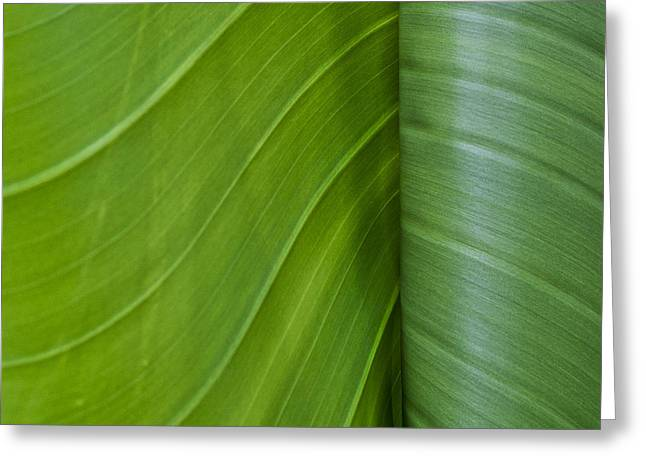 Green Leaves Series  6 Greeting Card