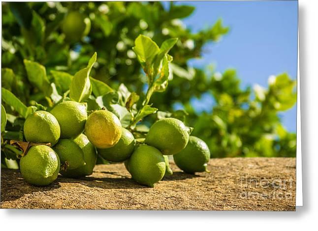 Green Lemons Greeting Card by Carlos Caetano