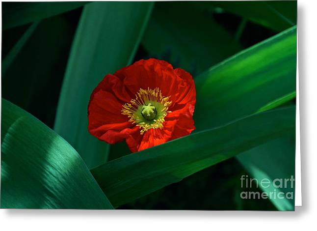 Green Loves Red Loves Green Greeting Card by Byron Varvarigos