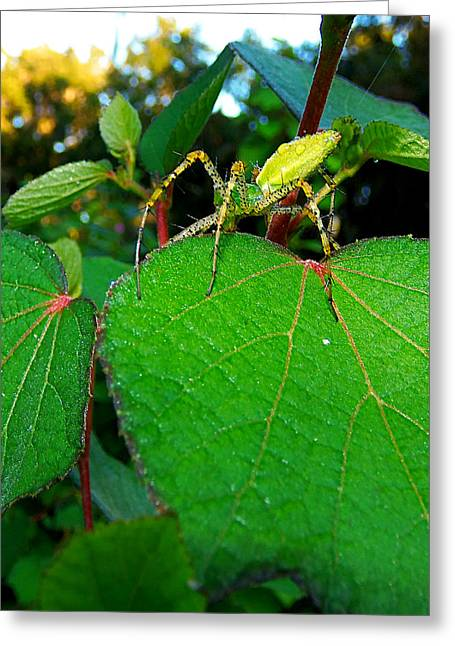 Greeting Card featuring the photograph Green Lynx Spider 002 by Chris Mercer