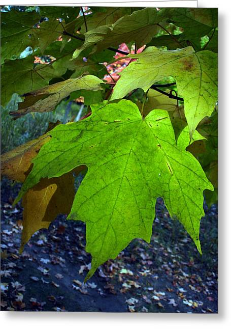 Green Maple Leaves Greeting Card by Michel Mata