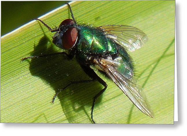 Green Metallic Fly Greeting Card