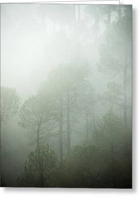 Green Mist Greeting Card by Rajiv Chopra